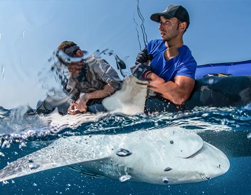 Lukas Müller beim taggen eines Hais auf dem Meer